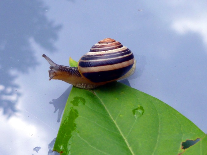 snail-1592877_1920